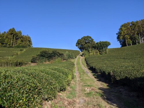 坂道の茶畑