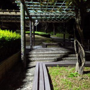 夜の蓮華寺公園