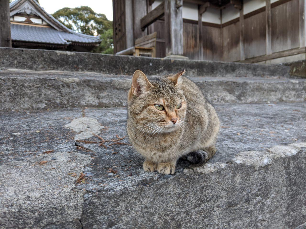 寺に住む猫